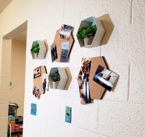 dorm room succulents and memory boards